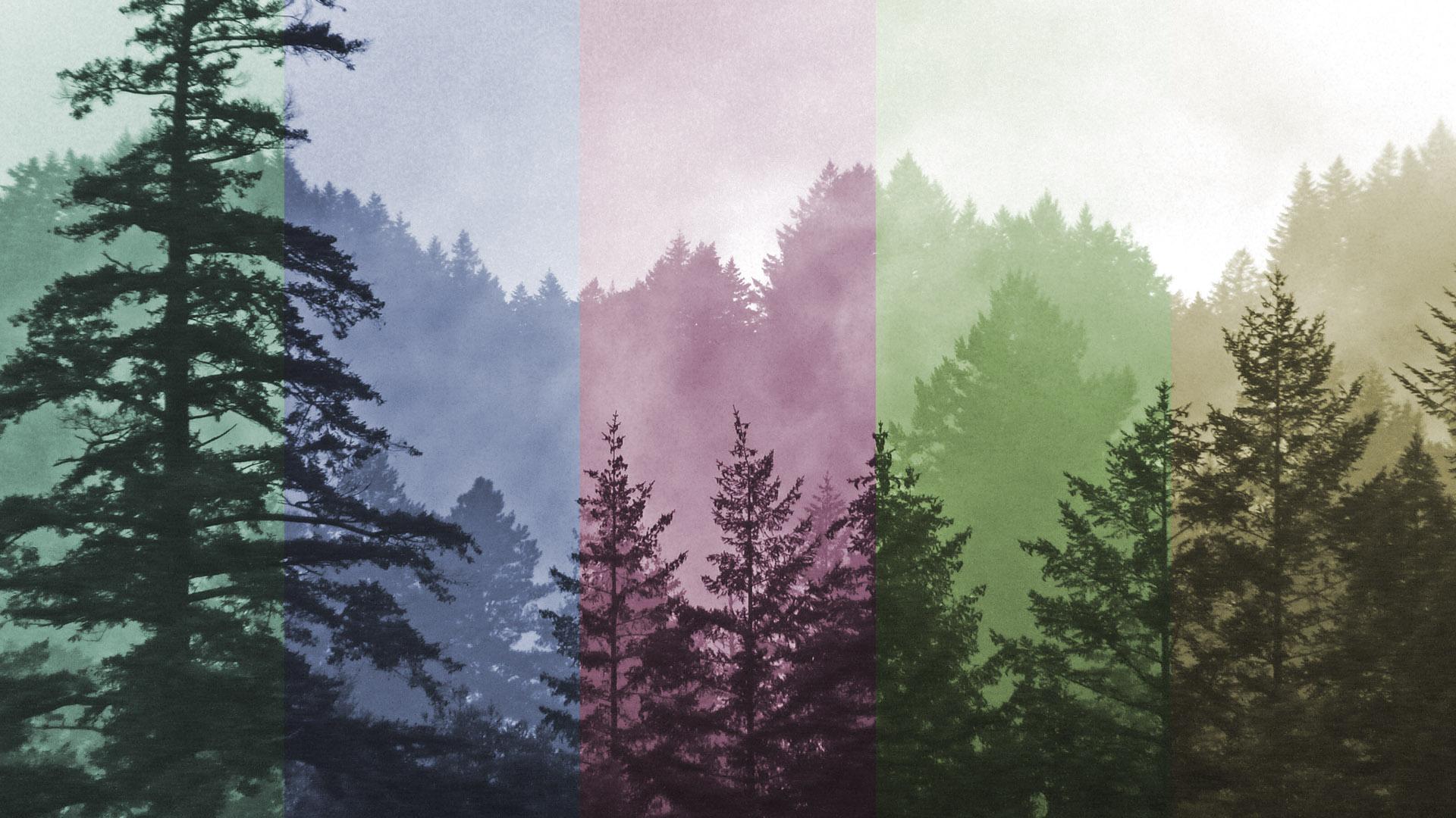 efecto fotográfico de colores cover
